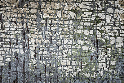Neglect Photograph - Old Painted Wood Abstract No.6 by Elena Elisseeva