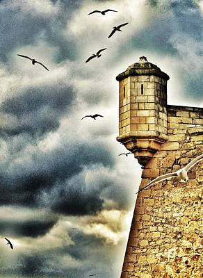 Flying Seagull Photograph - Once Upon A Time... by Marianna Mills
