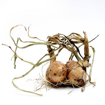 Healthy Eating Photograph - Onions by Bernard Jaubert