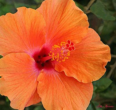 Painting - Orange Hibiscus by Ellen Henneke