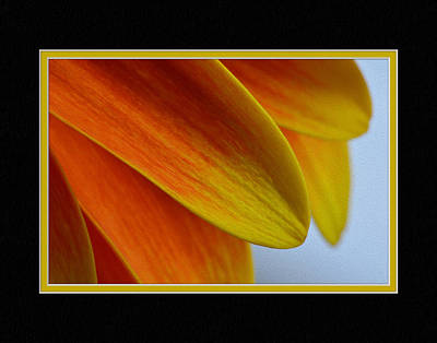 Pixel Art Mike Taylor - Orange/Yellow Gerbera Close-Up by Charles Feagans