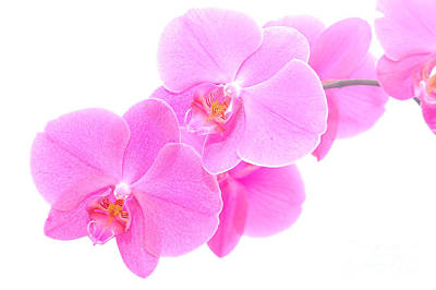 Orchid Isolated Art Print by Michal Bednarek