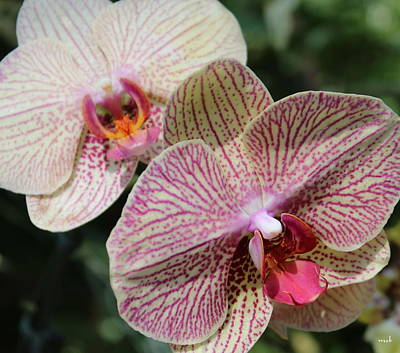 Orchid Two Art Print by Mark Steven Burhart