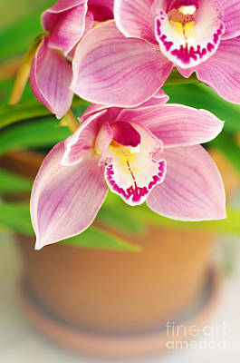 Flower Gardens Photograph - Orchids by Carlos Caetano