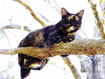 Photograph - Cat - Out - On - A - Limb by D Hackett