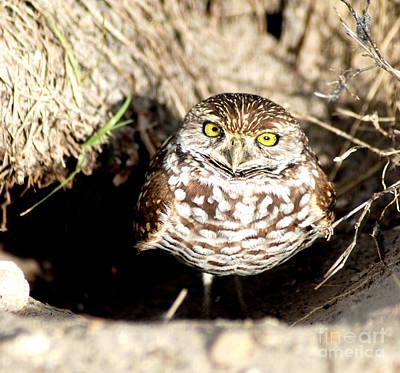 Photograph - Owl by Oksana Semenchenko