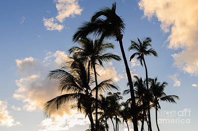 Photograph - Palm Trees Silhouetted Against A Tropical Sunset Maui Hawaii Usa by Don Landwehrle