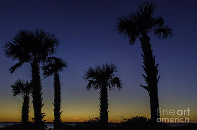 Photograph - Palmetto Sunset by Dale Powell