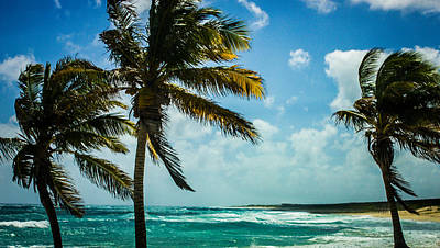 Photograph - Palms In Paradise by Sara Frank