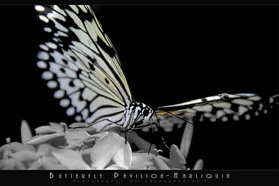 Photograph - Paper Kite IIi by AGeekonaBike Fine