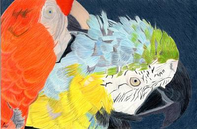 Drawing - 2 Parrots by Bav Patel
