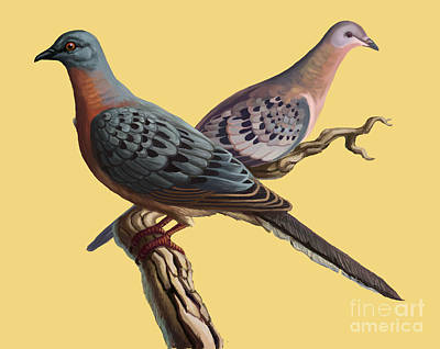Pigeon Photograph - Passenger Pigeon by Spencer Sutton