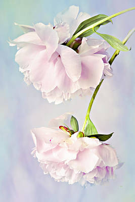 Photograph - Pastel Peonies by Theresa Tahara