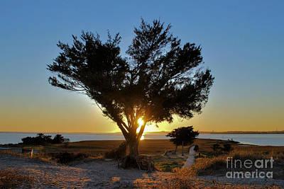 Mellow Yellow - Pastel Sunset by Bob Sample