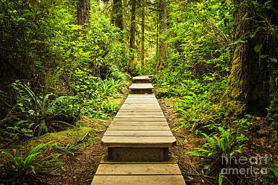 British Columbia Photograph - Path In Temperate Rainforest by Elena Elisseeva
