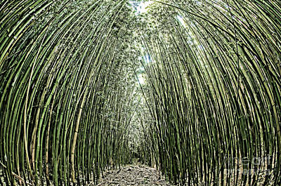 Photograph - Path Through A Bamboo Forrest On Maui Hawaii Usa by Don Landwehrle