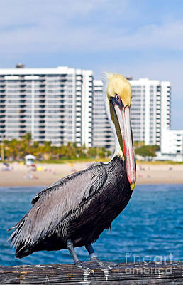 Photograph - Brown Pelican by Les Palenik