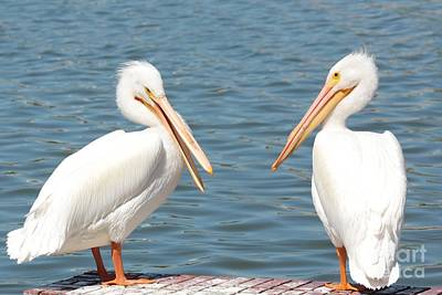Photograph - Pelican Pals by Carol Groenen