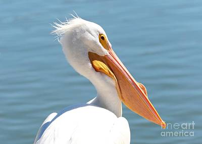 Photograph - Pelican Profile by Carol Groenen