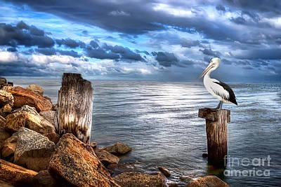 Digital Art - Pelican's Pride by Shannon Rogers