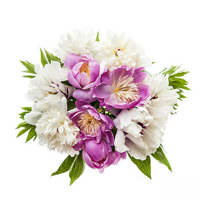 Arrange Photograph - Peony Flower Bouquet  by Elena Elisseeva