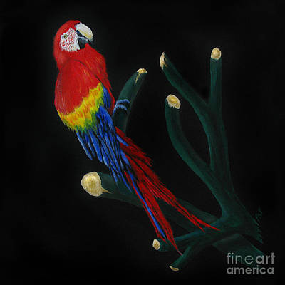 Painting - Perched Macaw by Peter Piatt