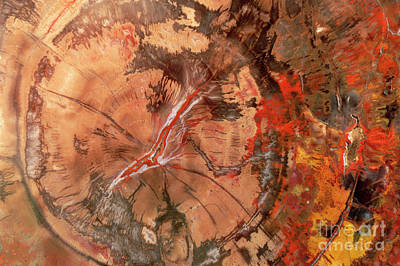 Petrified Forest Arizona Photograph - Petrified Wood Detail by Yva Momatiuk John Eastcott