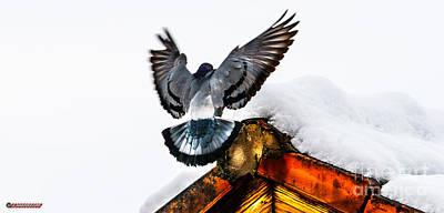 Aloha For Days - Pigeon by Jetmir Sejdiu