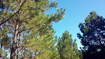 Outdoors Photograph - Pine Forest Fall by Kenny Glover