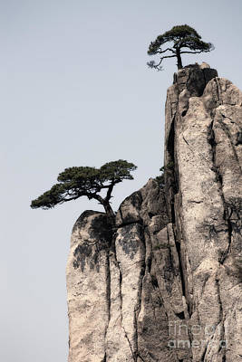 Anhui Photograph - Pine Trees On Huangshan Mountain China by Fototrav Print