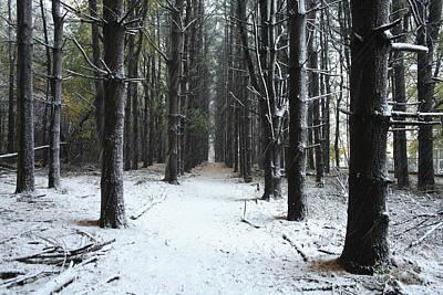 Pines In Snow Art Print