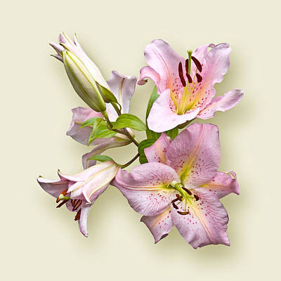 Art Print featuring the photograph Pink Lilies On Cream by Jane McIlroy
