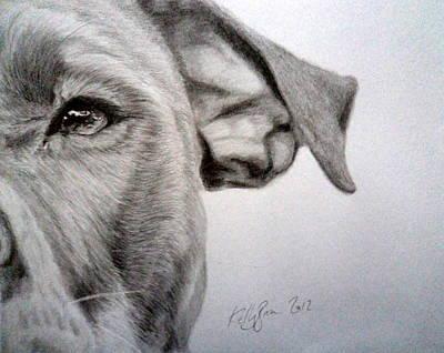 Pitbull Drawing - Pit-bull by Skyrah Saunders