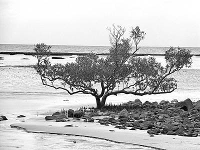 Sea Photograph - Plant In Beach by Girish J