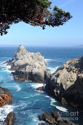 Point Lobos Number Four Original by Catherine Lau