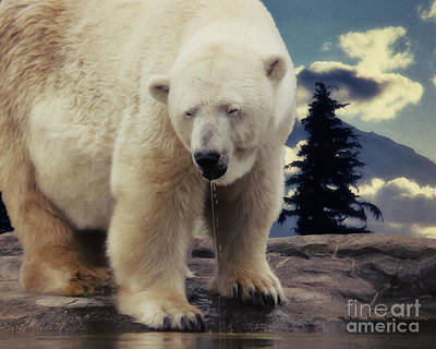The Trees Mixed Media - Polar Bear by Angela Doelling AD DESIGN Photo and PhotoArt