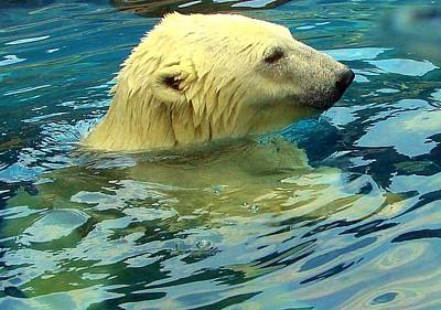 Photograph - Polar Bear by Anthony Seeker