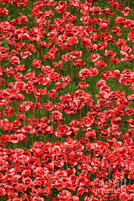 Photograph - Poppies by David Warrington