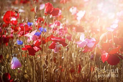 Growth Photograph - Poppies In Sunshine by Elena Elisseeva