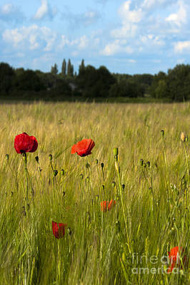 Landscape Photograph - Poppies by Svetlana Sewell