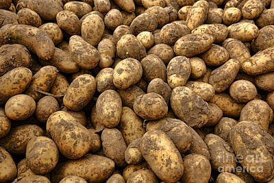 Local Food Photograph - Potatoes by Olivier Le Queinec