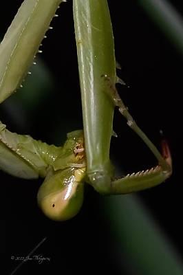 Soap Suds - Praying Mantis by Jim Thompson