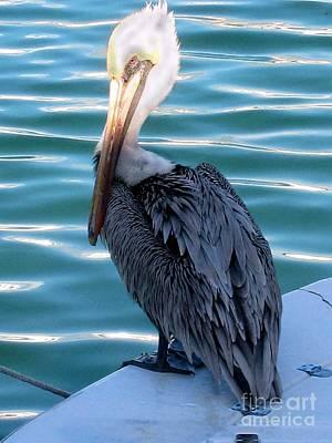 Precious Pelican Art Print by Claudette Bujold-Poirier