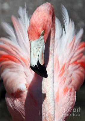 Photograph - Pretty Flamingo by Sheryl Unwin