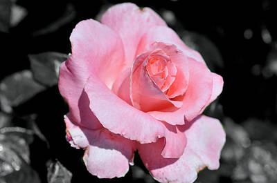Digital Art - Pretty In Pink by Teri Schuster