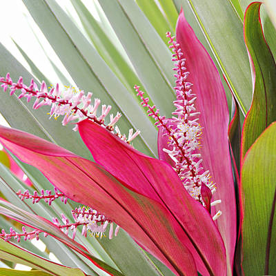 Photograph - Pretty Pink In Key West by Simply  Photos