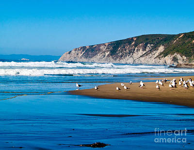 Pt Reyes National Seashore Art Print by Bill Gallagher