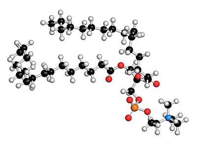 Molecule Photograph - Pulmonary Surfactant Molecule by Molekuul