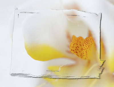 Yellow Flower Photograph - Pure White by Sebastian Musial