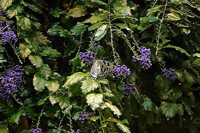 Purple Flowers Photograph - Purple Beauty by Aimee L Maher Photography and Art Visit ALMGallerydotcom